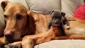 Подборка фото животных-друзей выросших вместе. В стиле «тогда» и «сейчас»