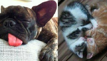 Фото самых милых спящих животных, которые подарят вам улыбку