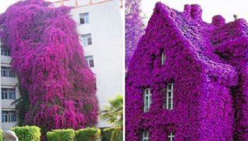 Фото самых красивых «цветочных» домов мира