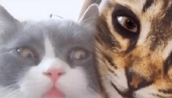 Реакция домашних питомцев на «кошачьи» фильтры для лиц их хозяев