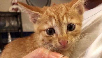 Женщина нашла котенка и решила проверить, нет ли здесь и других малышей. Шестое чувство не подвело ее