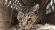 Этот кот потерялся и встретился с хозяином спустя 7 лет