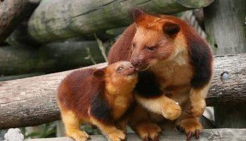 Фото редких видов животных, о которых не многие знают