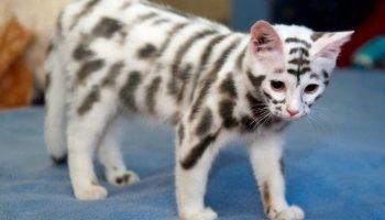 22 кошки с уникальным окрасом шерсти