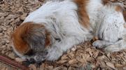 Нелюди выбросили собаку на ходу из машины, она страдала, а люди проезжали мимо…