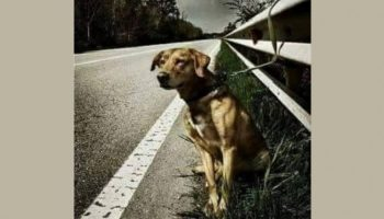 Хозяин пса просто привязал его к отбойнику на дороге и уехал…