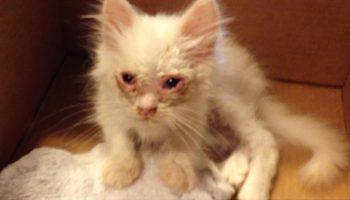Семейная пара подобрала на улице больную кошечку. Никто и представить не мог, кем она станет через несколько недель!