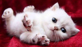 15 невероятно милых котят для тех, кому хочется поднять себе настроение
