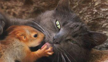 Кошка решила, что чужих детей не бывает и стала мамой брошенным бельчатам