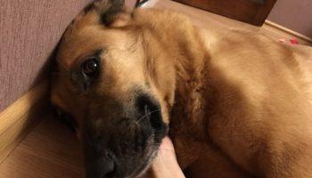 Удача обходила собаку стороной целых 5 лет. Она жила в приюте, мечтая о доме