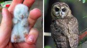 Крошечные детеныши животных, которые совсем не похожи на своих взрослых родителей