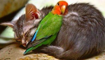 Подборка снимков самой необычной дружбы животного мира