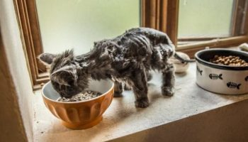 Превращение тощего, как скелета, Барли, в роскошного кота