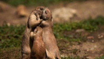 Обнимашки животного мира. Какая у них трогательная любовь!