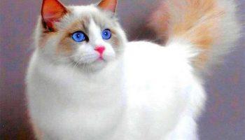15 удивительных поверий о кошках