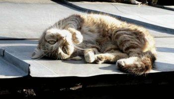Вороны кружились над котом, который лежал на крыше. Кот не мог встать и вороны клевали его