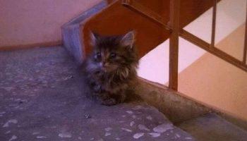 Котенок из подвала сам выбрал себе дом и стал Маркизом