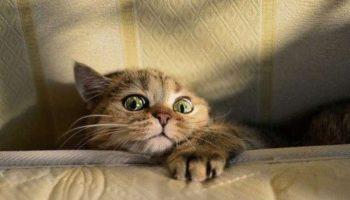 Выкидывая мусор обнаружила кота, не смогла пройти мимо этого Висилия. Принесла домой