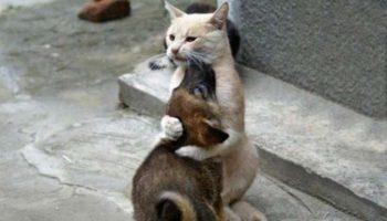 15 фотодоказательств, что у каждой кошки должна быть своя собака!