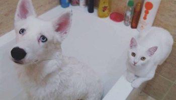 Хозяева хотели взять котенка из приюта для своего щенка, но котенок их уже ждал на улице