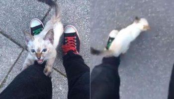 Маленький бездомный котенок не стал ждать холодов, а сам нашел хозяина!