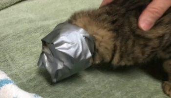 Волонтеры спасли кошку, которую замотали в скотч и выкинули на улицу