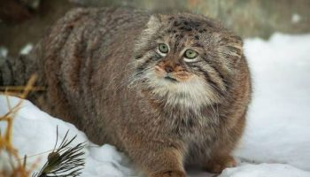 Девушка подобрала на улице котенка, а из него вырос настоящий защитник!