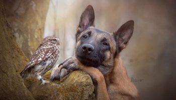 30 милых фотографий пса и его подруги совы, которые просто светятся теплом