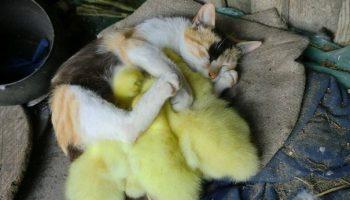 Удивительная дружба животных. Нам бы брать пример!