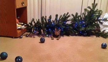 Фото наглых котов, которые свалили елку и очень довольны собой