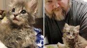 Потеряв своего кота, пара усыновила котёнка с очень похожей судьбой
