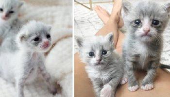 Недоношенные котята, обнявшиеся, чтобы выжить, получили помощь как раз вовремя