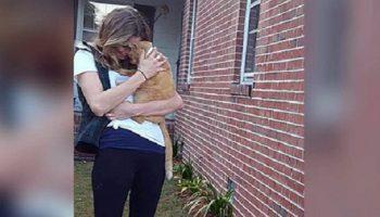 Семейная пара разыскивали потерявшегося кота даже ночами. Но первые хорошие вести они услышали лишь спустя 536 дней