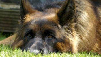 Женщина, пришедшая в приют, попросила двух самых старых собак. Она рыдала, забирая их, а сотрудники не верили своему счастью