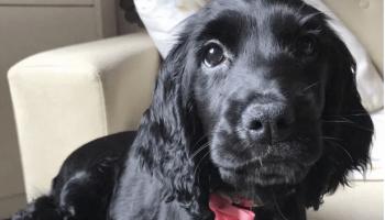 Хозяева всего на два часа оставили свою собаку одну, когда пришли не узнали свою кухню