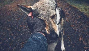 На днях наблюдал такую картину: на улице на асфальте лежит пёс