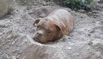 Живьём закопали собаку, вдобавок привязали, чтобы не смогла выбраться