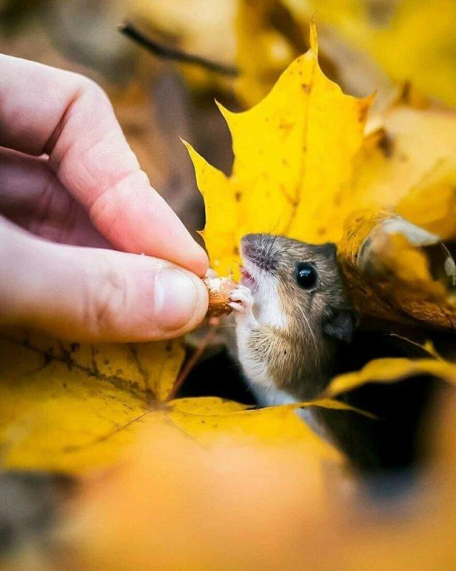 Сказочный лес находящийся в Финляндии, взглядом финского фотографа