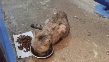 Измученный кот сидел на улице. Девушка забрала его в дом, но тот отказывался есть и пить…