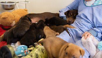 Собака очень заскучала, когда ее щенки выросли, но в это время в приюте появилась истощенная четвероногая мама