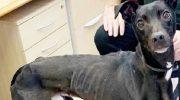 Худющего пса, ради щенка, выгнали на улицу, но нашелся тот, кто полюбил его всем сердцем