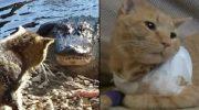 15 котов-героев, они спасли жизнь своим хозяевам