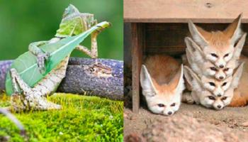 Случайные фотографии животных, которые удивляют!