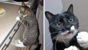 10 фото целеустремленных котов, которые готовы на всё во имя еды