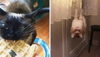 Иногда в котах ломаются настройки, и они ведут себя странно, но смешно: 14 доказательств