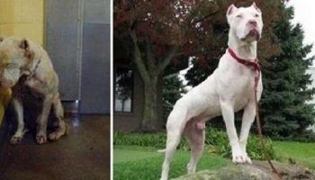 15 трогательных фотографий собак до и после приюта