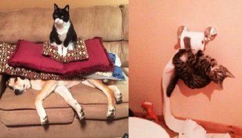 Смешные фото от хозяев котиков, которые подарят море позитива!