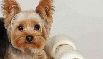 Умнейшая собака, которая приводит в восторг своими умениями
