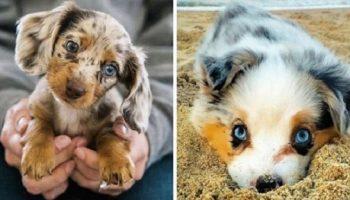 Фото милых щенков, которые вызывают у любого улыбку и умиление