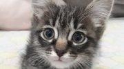Девушка, прогуливаясь с собакой, услышала плач маленького котенка